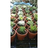 Cactus Y Suculentas Para Toda Ocasion