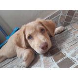 Cachorras En Adopción De 3 Meses