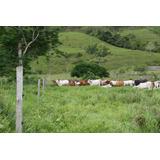 Vendo Terreno Para Proyecto Agrícola Ganadero