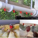 Bebedero Tipo Niple Para Pollos, Aves Etc