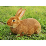 Kit De Manuales: Cría Y Manejo De Conejos