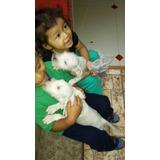 Cachorros De Dogos Argentinos