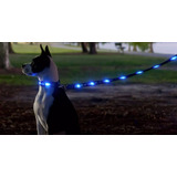 Correas Led Para Mascotas - Precios X Mayor