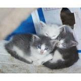Gatitos Rescatados Adopción Responsable, Están Sanitos, Desp