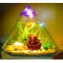Acuario Pirámide Iluminada Con Decoración !