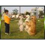 Silbato Pito Ultrasonico Para Diestramiento Canino Perros