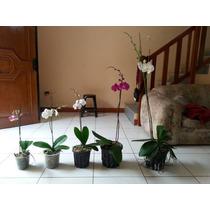 Macetas Para Orquideas