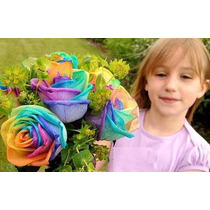Rosa Arco Iris - 15 Semillas - Flor De 7 Colores