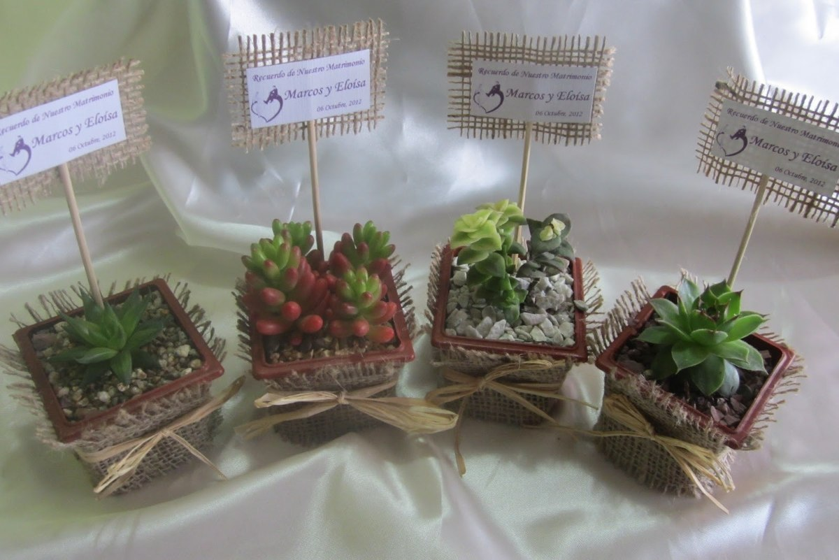 Tipos de plantas para terrario v rias - Tipos de plantas ...